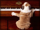 Dog playing Piano