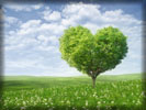 Valentine's Day, Heart Shaped Green Tree