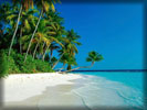 Beach And Sea, Coconut Palms, White Sand