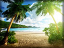 Beach and Sea, Palm Trees