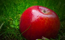 Red Apple in Green Grass