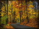 Forest, Autumn, Road