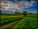 Green Field, HDR